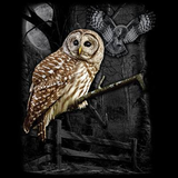 Owl Wilderness tshirt - TshirtNow.net - 2