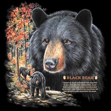 Black Bear Wildlife tshirt - TshirtNow.net - 2