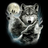 Three Wolves Wildlife Tshirt - TshirtNow.net - 2