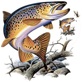 Brown Trout Tshirt with Oversized Print - TshirtNow.net - 2