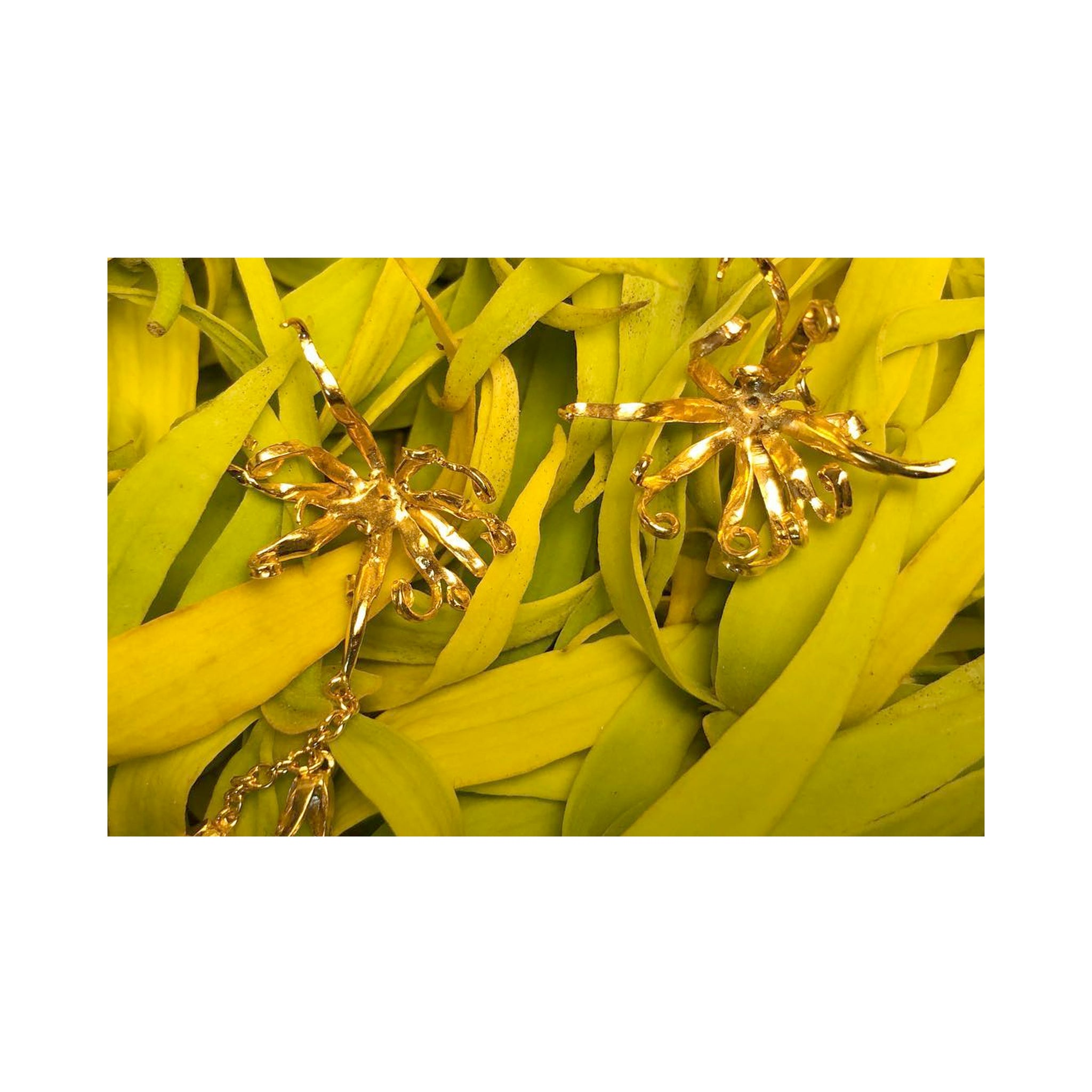 YLANG-YLANG Earrings