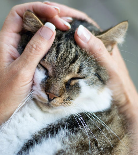 therapeutic benefits of cats