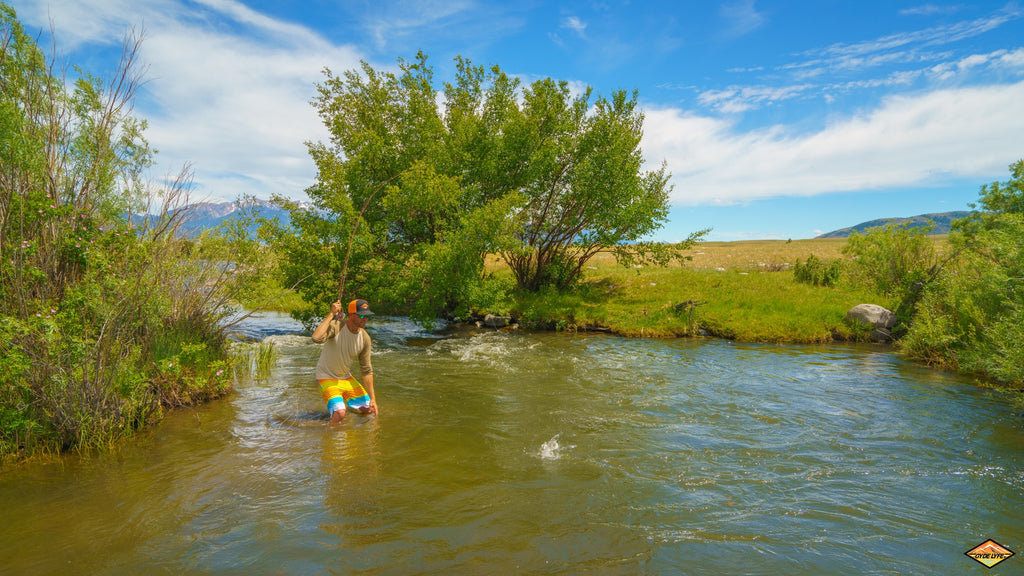 montana fly fishing trout hatch rod madison big sky