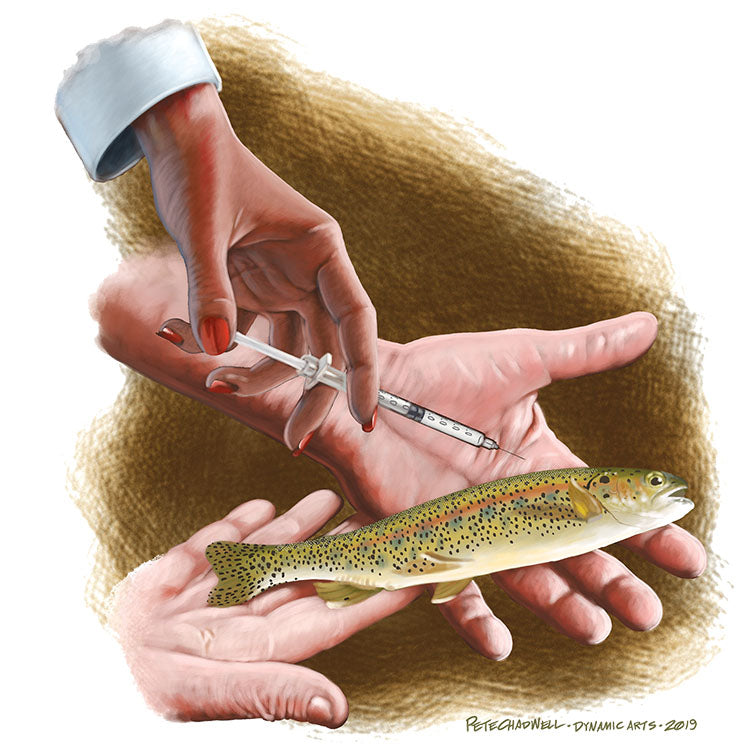 fish injection needle photo trout