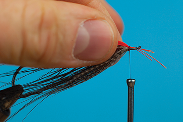 insert hackle fly tying