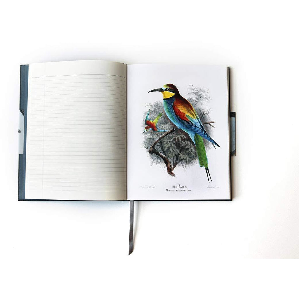Observer's Notebook: Birds