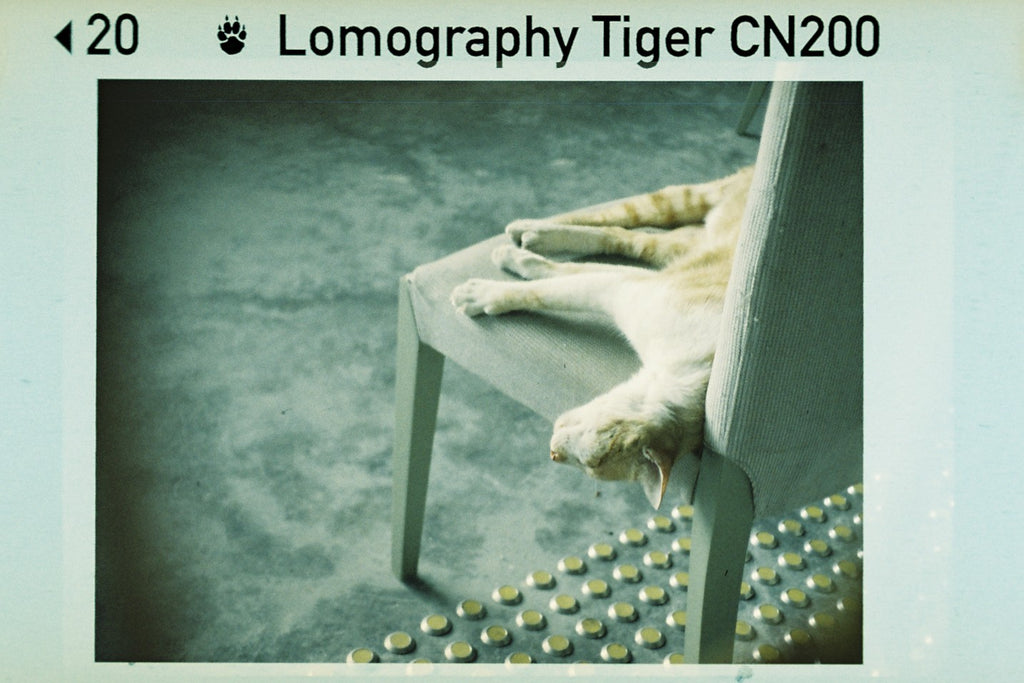 Pack de 3 Lomography Color Tiger 200 110mm