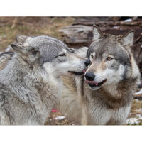 Donate to Wolf Park