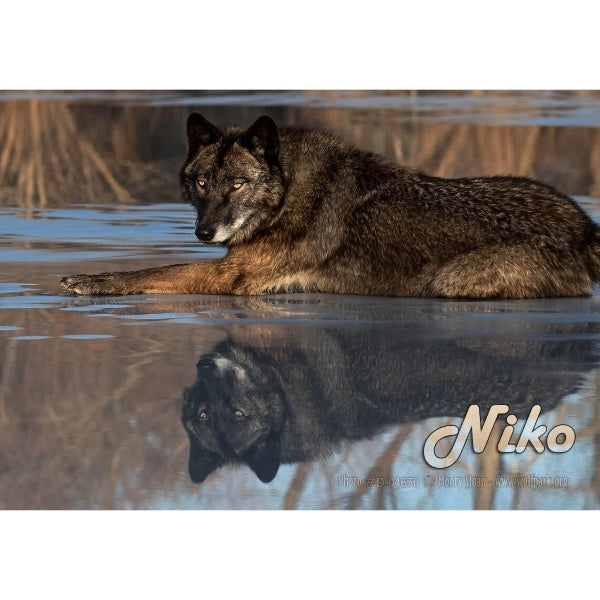 "Wolf Park Photo Magnets 2""x3"""
