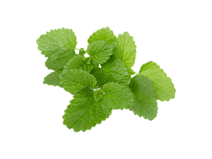 organic lemon balm extract