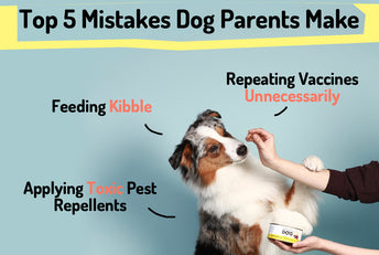 Top 5 Mistakes Dog Parents Make
