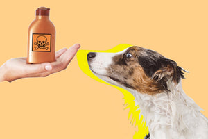 6 TOXIC INGREDIENTS THAT MIGHT HURT YOU & YOUR DOG