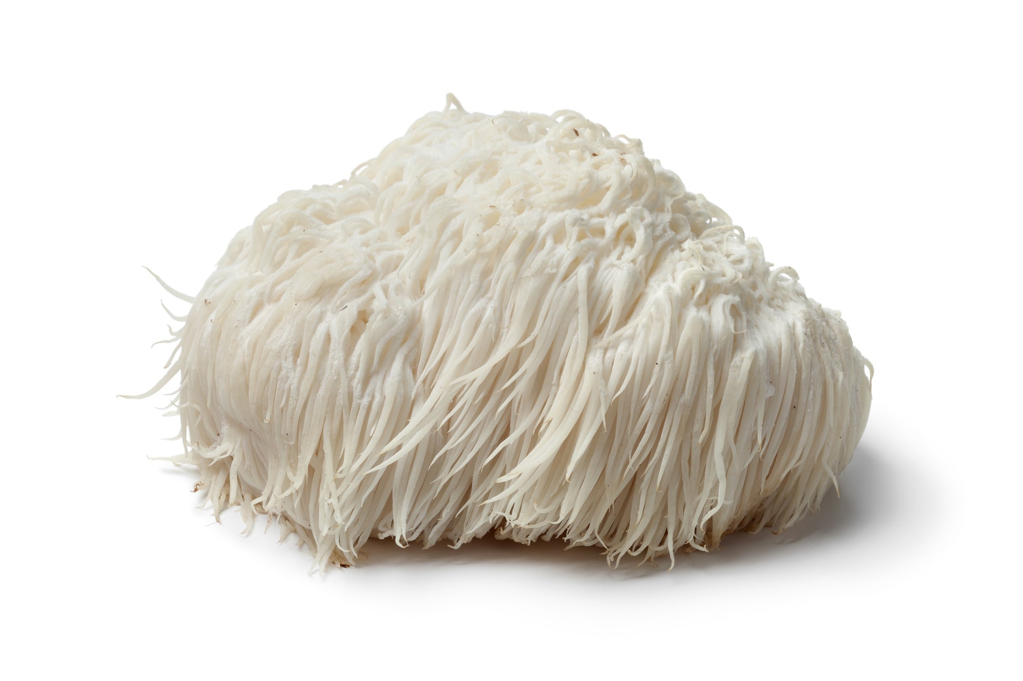 Lion's Mane Mushroom on a white background