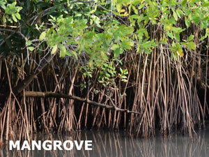 Mangrove Honey with Moringa