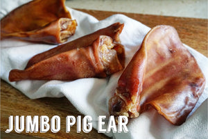 Pig Ear (Hairless)