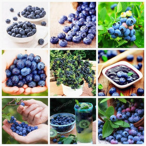 100 Pcs/Bag Blueberry Bonsai Edible Organic Heirloom Fruit Plant Dwarf Tree Potted For Home Garden