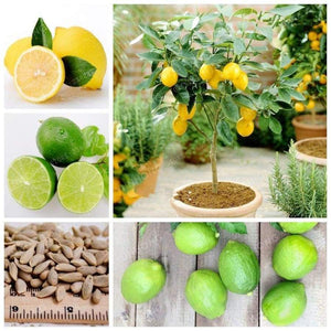 30 Pcs/Bag Bonsai Lemon Tree High Survival Rate Organic Fruit Indoor Plant For Home Garden Potted