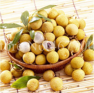 5 Pcs Bonsai Longan Extra-Sweet Extra-Big Fruit Tasty Dragon Eyes Rare Exotic Potted Plant For Garden Flower Pot Plants