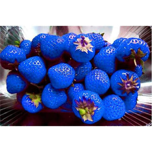 Blue Strawberry Bonsai Climbing Plant Tree Organic Fruit For Home Garden 500Flores/Bag