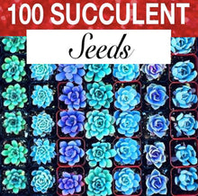 Load image into Gallery viewer, 100 Seeds Rare Blue Succulent Cactus