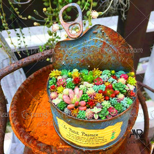100 Seeds Rare Colorful Mini Succulent Cactus - elitehomeimage