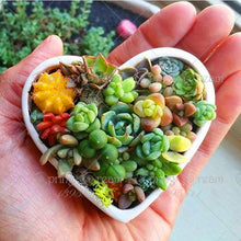 Load image into Gallery viewer, 100 Seeds Rare Colorful Mini Succulent Cactus - elitehomeimage