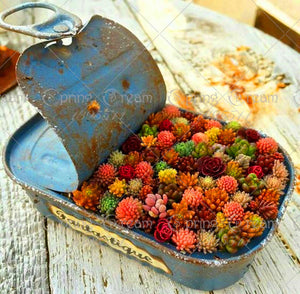 colorful seed mix succulents