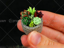 Load image into Gallery viewer, tiny succulent plants