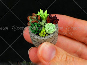 tiny succulent plants
