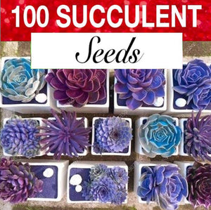 Rare purple succulent seeds.