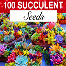 Load image into Gallery viewer, Colorful Succulent Fiesta Mix (100 seeds)
