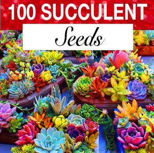 Colorful Succulent Fiesta Mix (100 seeds)