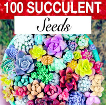 Load image into Gallery viewer, succulent seeds colorful succulent seeds