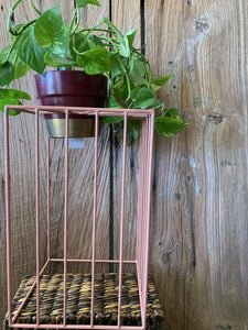 Sunbeam Plant Stand - Rose Tall