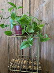 Sunbeam Plant Stand - Gold Short