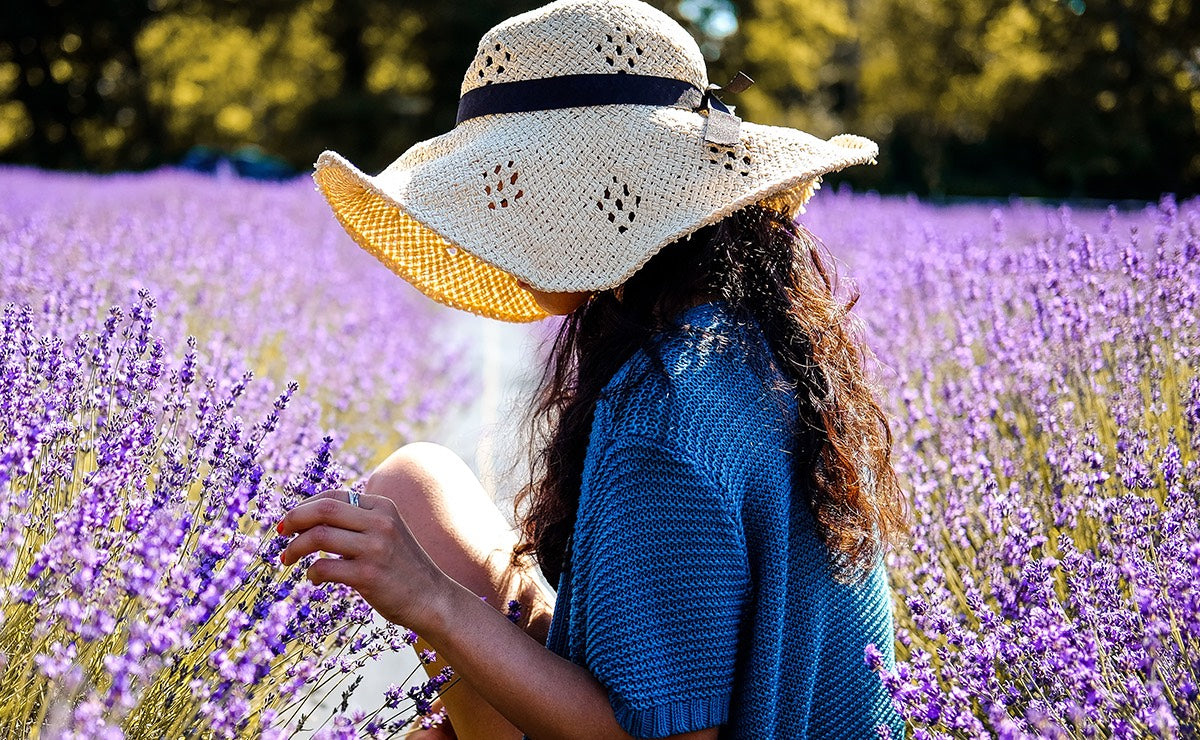Why Lavender Oil Gets Deeply Under Your Skin