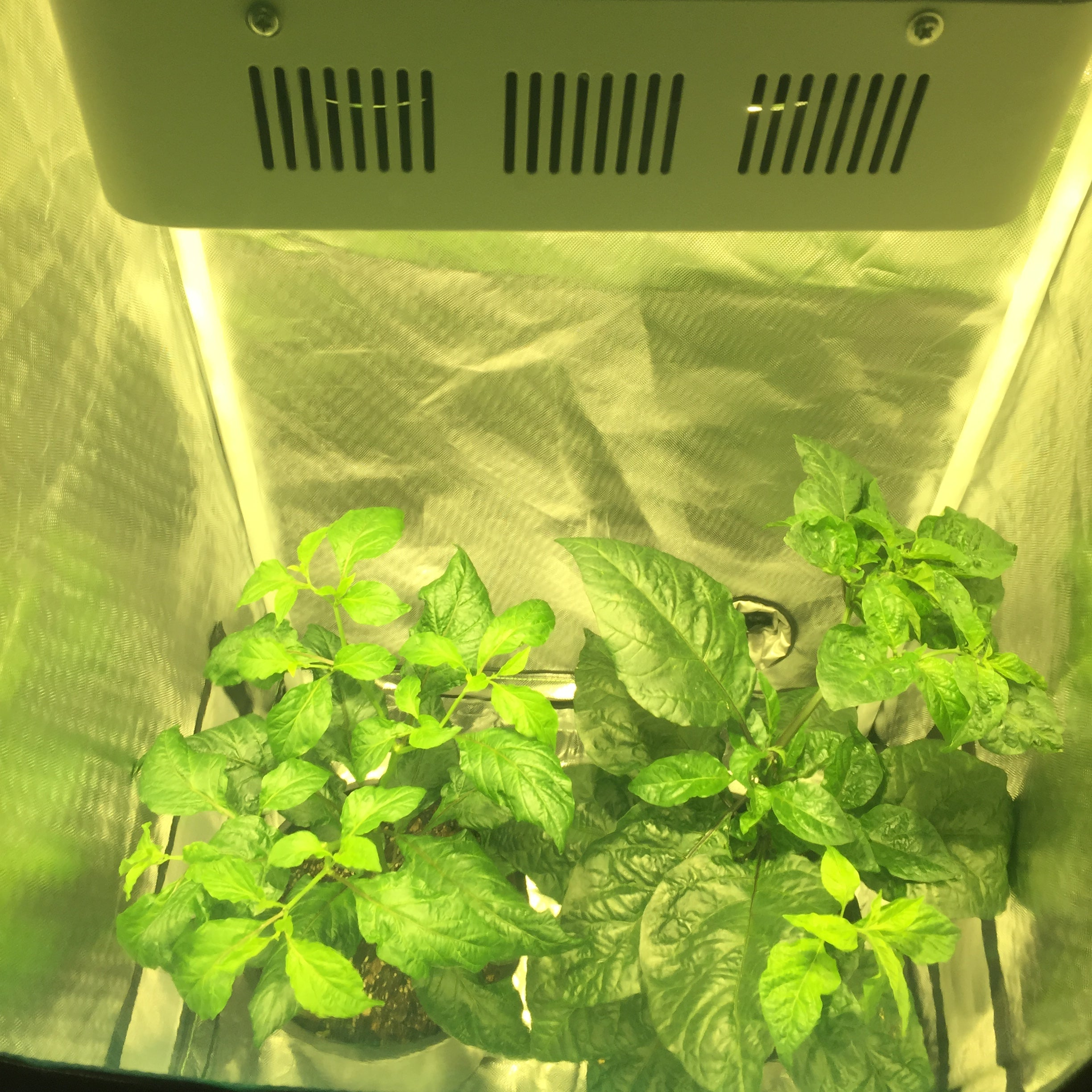 "Complete Grow Kit - 24""x24""x48"" 1680D Grow Tent - 400W CREE Full-Spectrum LED - 4"" Fan and Filter"