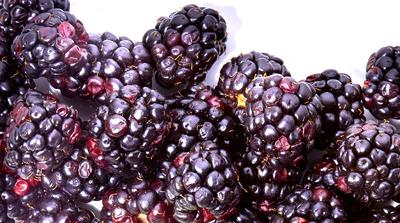 Why We're Obsessed with the Benefits of Blackberries