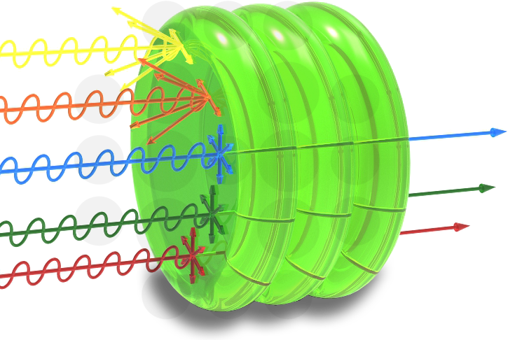 Chloroplast absorbing and reflecting light