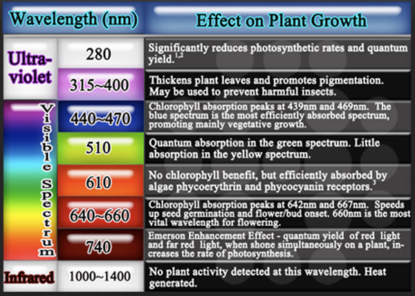 wavelength ranges and their affect on plant growth.