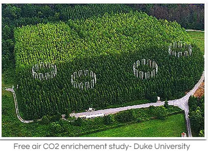 Free Air CO2 study at Duke University