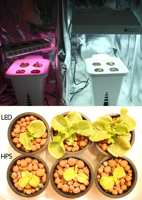 LED vs HPS Lettuce Grow Results