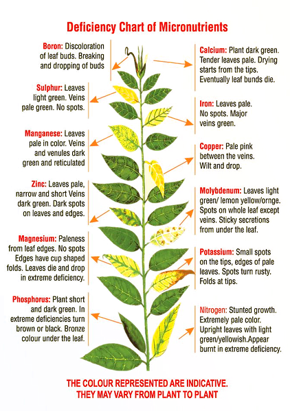 Infographic onplant deficiencies