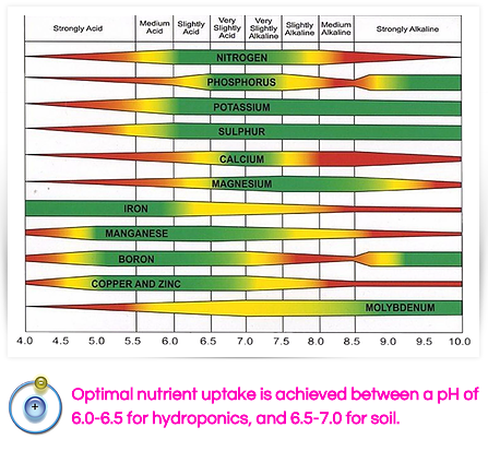 pH effect on nutrient uptake.