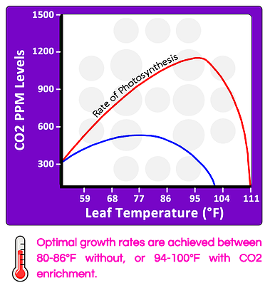 CO2 and Leaf Temperature Effect on Photosynthesis