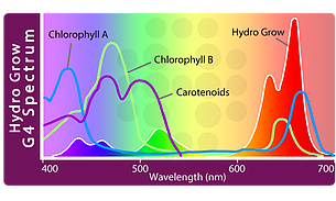 Hydro Grow G4 spectrum compaed to Chlorophyll Absortion Peaks
