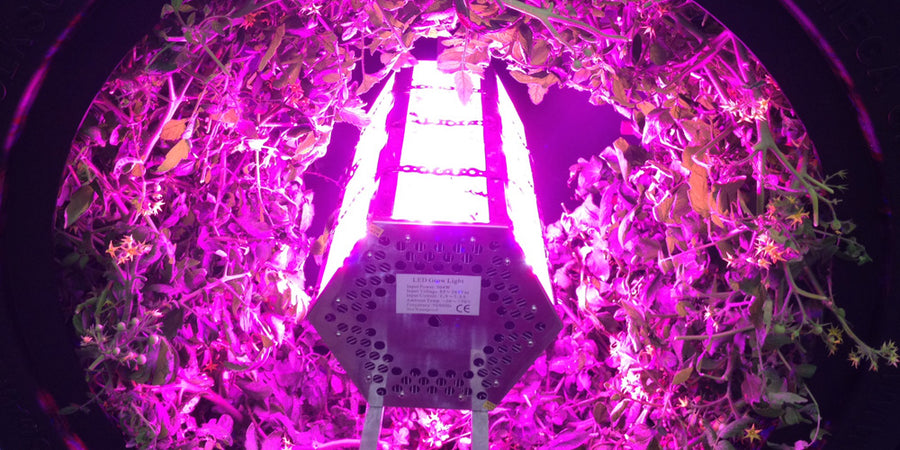 Penetrator 336X-VER 600W LED Grow Light