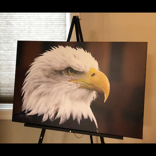 Pre-made Bald Eagle (32