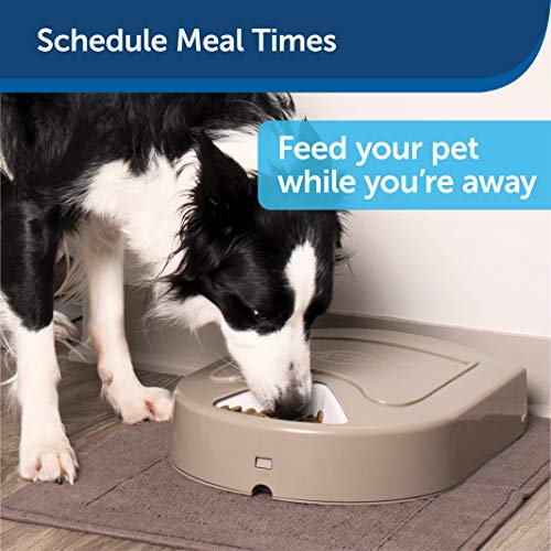 PetSafe 5 Meal Automatic Dog and Cat Feeder, Dispenses Dog Food or Cat Food, Digital Clock