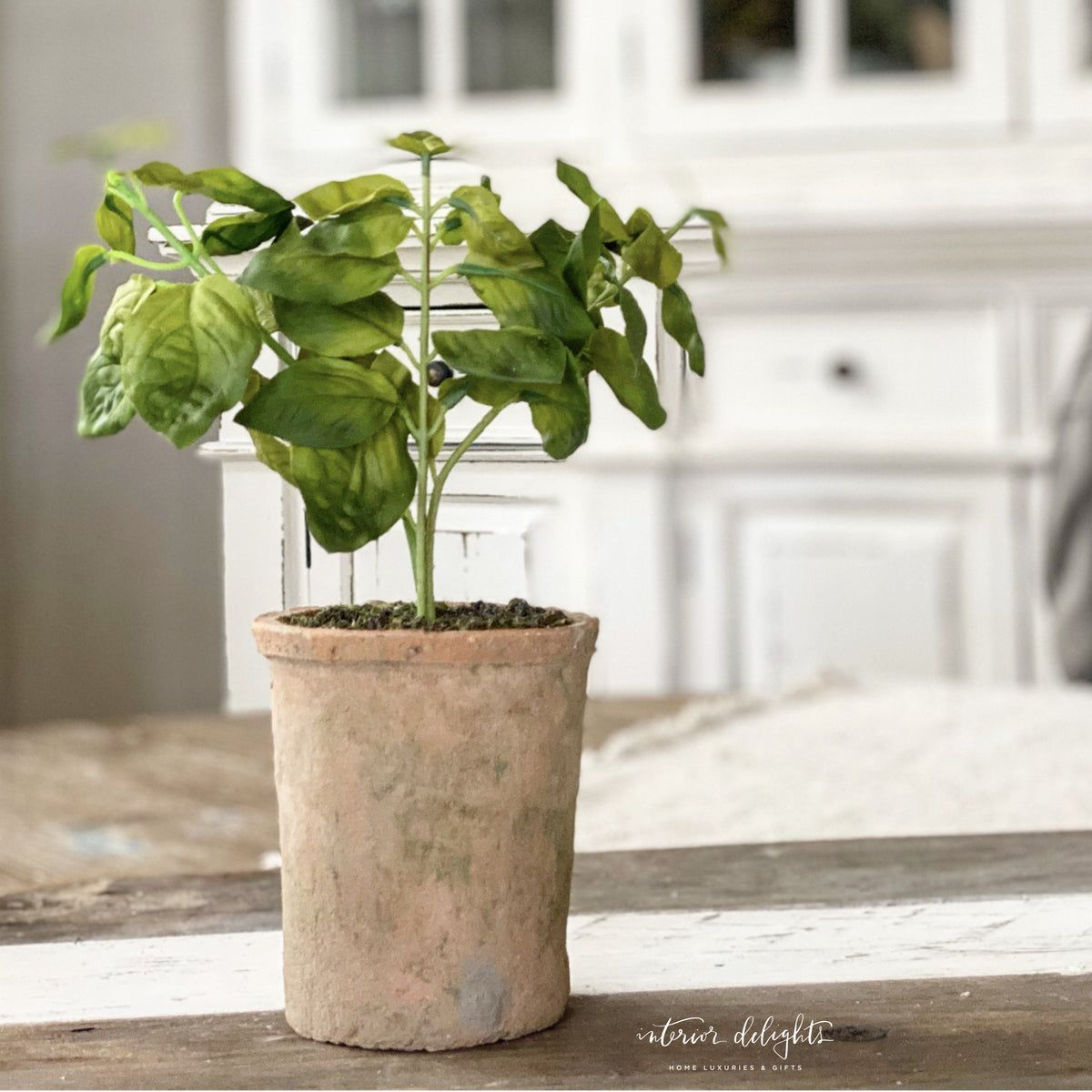 Irregular Terra Cotta Planter with Basil